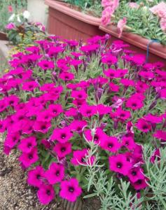 【画像】お花